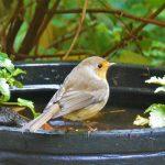 Praktische Tuinen Lissy Hurkams Dieren in de tuin Foto Jaques van der Weiden